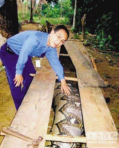村民捕获120岁大蛇 盘点动物世界的老寿星