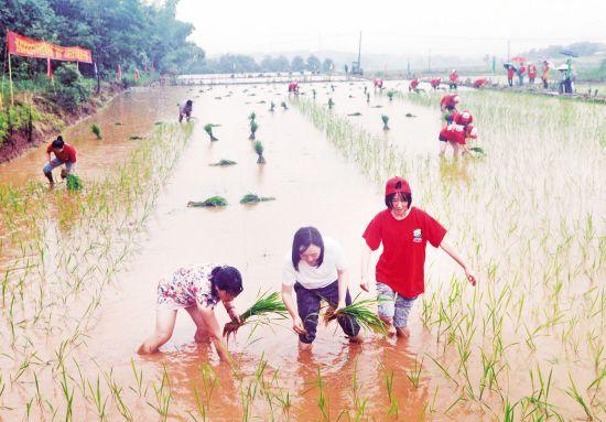 农耕文化节