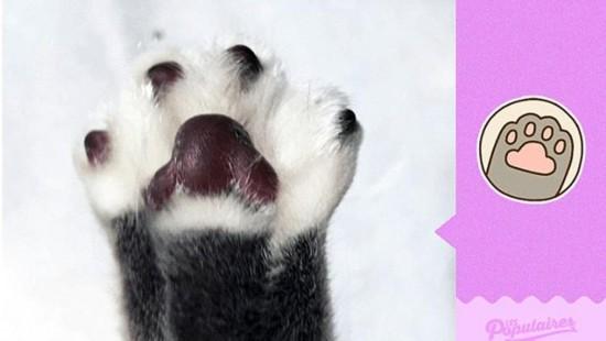 法国动画猫模仿大全图片惟妙惟肖铲屎官淡定微信哈哈大笑表情宠物表情图片