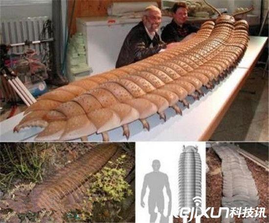 十大远古超级生物大盘点!2.4米长巨型蜈蚣(组图)