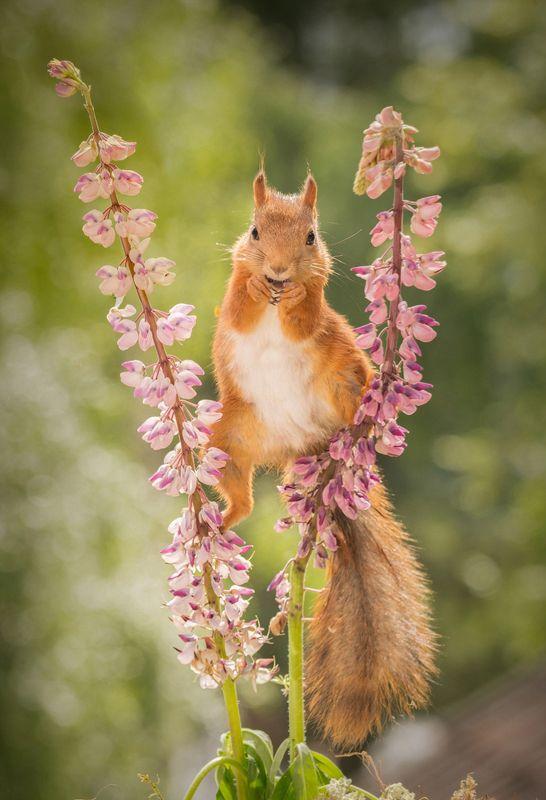 男子花园拍摄松鼠劈叉觅食瞬间