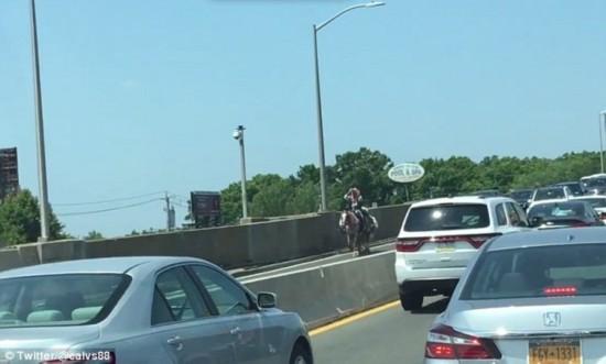 """美国一""""牛仔""""骑马过大桥引发交通堵塞(图)"""