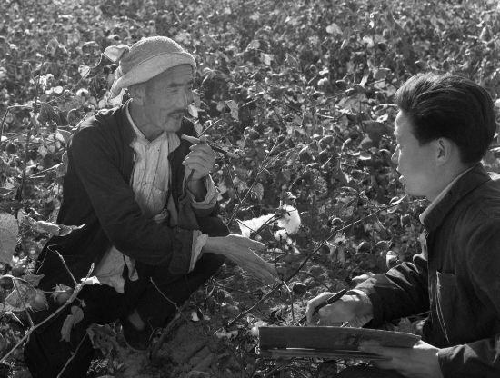 图为植棉能手吴吉昌(左)在棉田里介绍他的植棉经验。