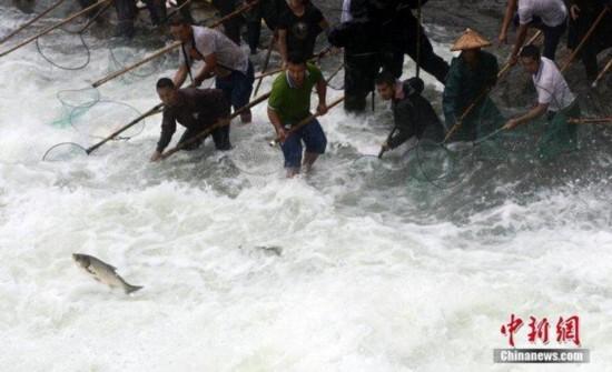 民众挖掘机捕鱼 浙江金华暴雨民众居然玩嗨了