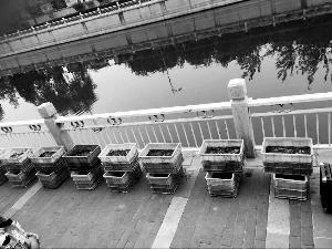 北京团体向路人出售放生用鱼 泥鳅80元一条