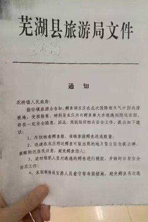 """安徽派10余人抓捕""""逃逸""""鳄鱼 目前已抓回10条"""