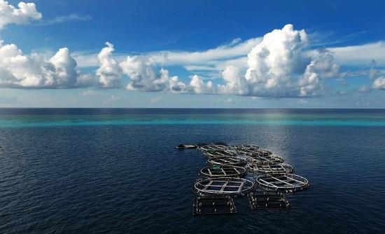 南沙美济礁礁盘附近的深海养殖基地(7月17日摄)。
