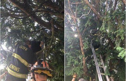为抓精灵被困树上