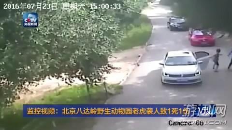 两名游客在动物园私自下车遭老虎袭击 结果一死一伤