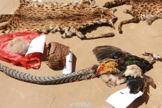 触目惊心!云南警方查获大量野生动物尸体(图)