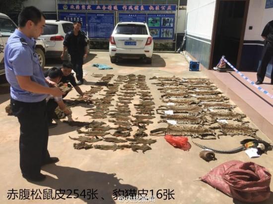 触目惊心!云南警方查获大量野生动物尸体【7】