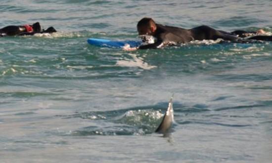 澳大利亞梅塔姆斯潭驚現4米長鯊魚 沖浪者劃水逃離