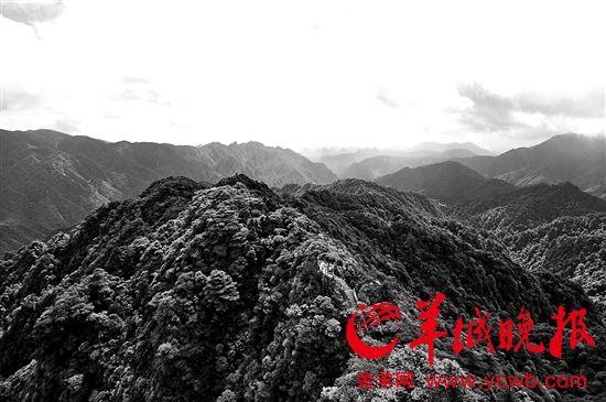 假日旅游好去处!南岭森林公园入选首批中国天然氧吧