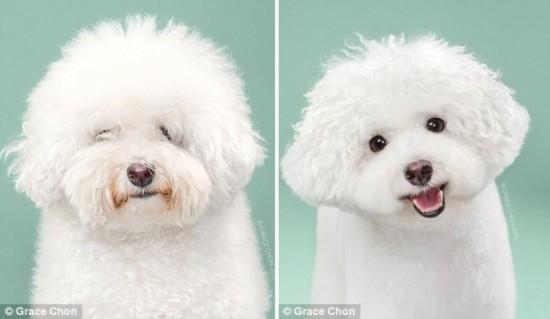 天壤之别!美摄影师拍摄狗狗美容前后对比照