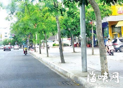 首山路71棵大树树池被人灌上水泥 执法遇取证难