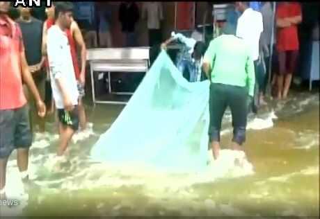 印度频频遭受暴雨袭击 市民在街边捕鱼