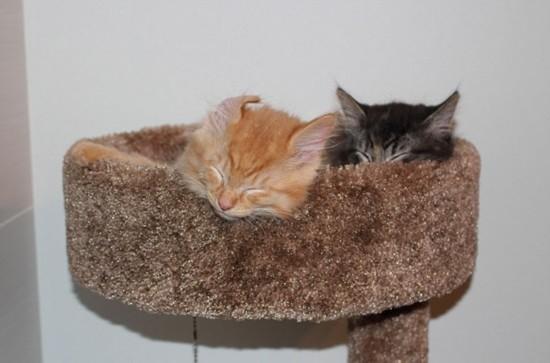 猫咪版的你若不离我就不弃 可是你俩都长胖了……