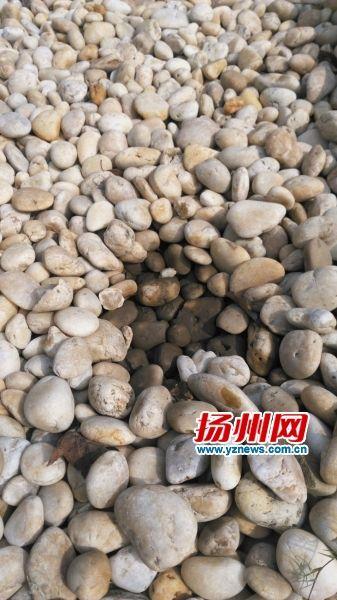 扒开绿岛内的鹅卵石,下层鹅卵石为湿的,蓄水效果明显