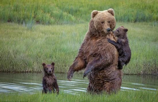 熊妈妈背怕水熊宝过河 面画暖心