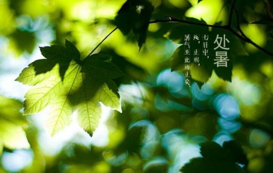 处暑手绘树叶素材