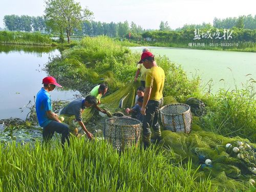 一亩水面能养多少鲫鱼_一亩田可以养多少鲫鱼_一亩地放多少鲫鱼苗