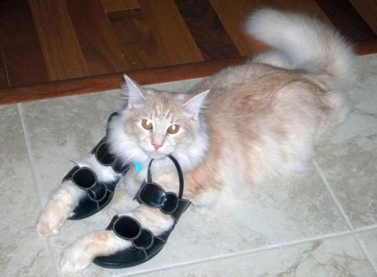 最近,网上一些可爱滑稽的图片展现了猫咪喜欢蜷缩在鞋里或尝试挤