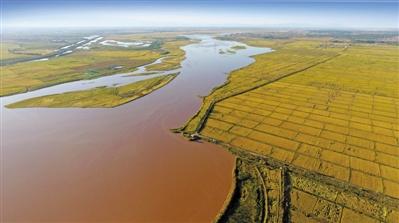 黄河金岸显生机