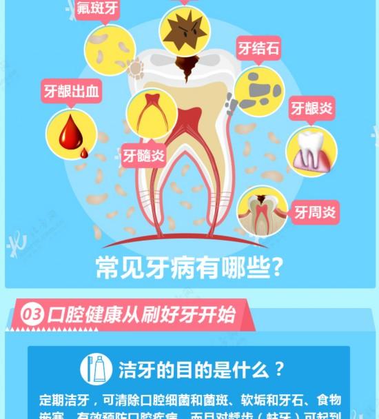 口腔内部结构图高清