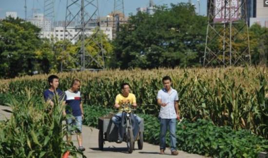 世界最贵玉米地!北京三环内唯一的农田(图)