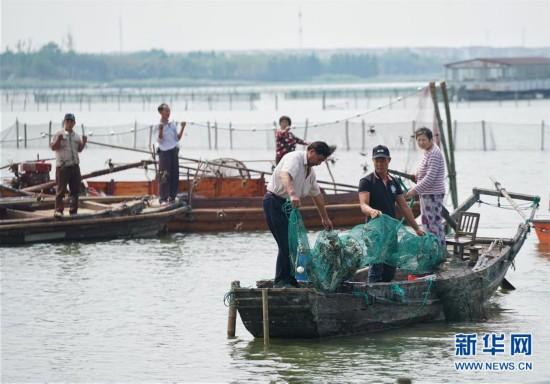 2016阳澄湖大闸蟹正式开捕(组图)