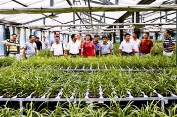 泰州本土兰花有了参考价 老品种关顶达上万元