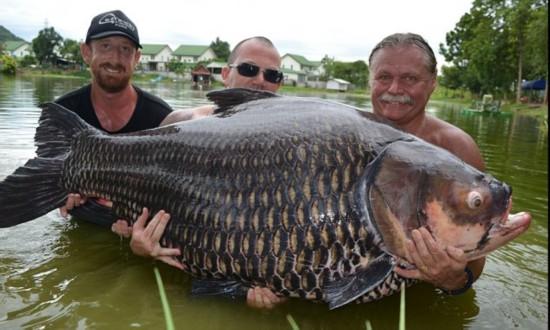 英国游客在泰国钓起200斤大鲤鱼(组图)