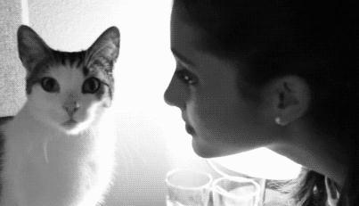 """主人逝世1年多 爱猫每天带着""""小礼物""""来到墓地守候(图)"""