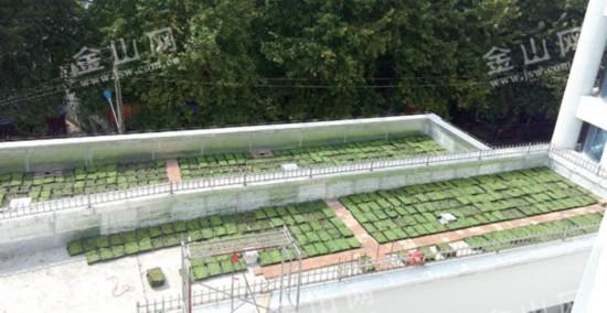 2016年底镇江市区绿地贴将达2.5万平方米