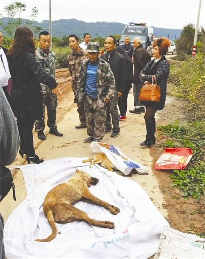 阆中:流浪狗连伤22人 疫区犬只进行捕杀和接种