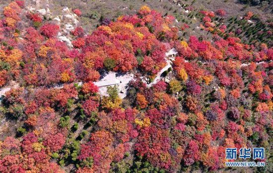 【大美中国】秋到山村红叶美