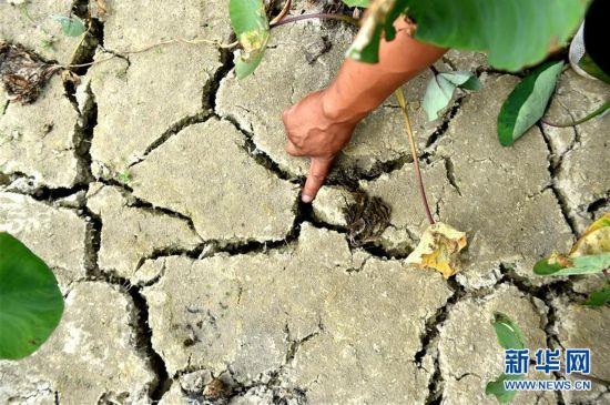广西57个县发生不同程度气象干旱