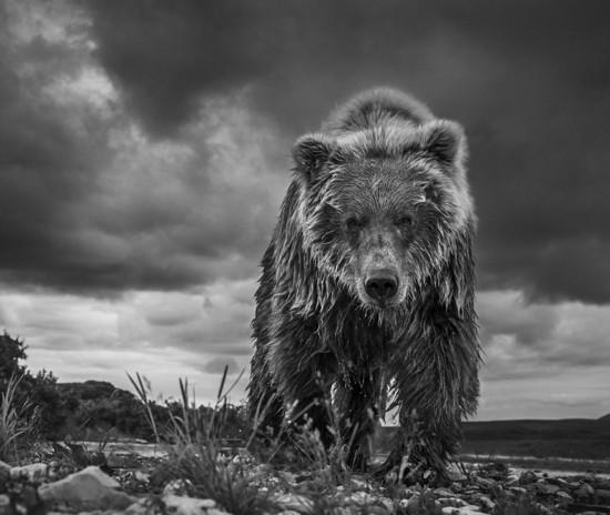 英野外摄影师记录自然获威廉王子好评