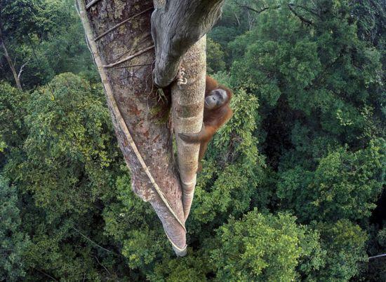 英国评选年度最佳野生动物摄影作品