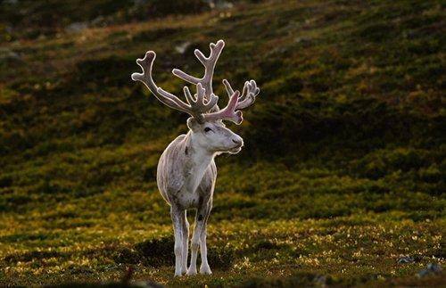 奇葩动物照片走红:羚羊长脖子大耳朵好神奇!