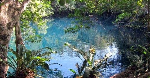潜水爱好者潜入百尺深天然水洞 发现森林奇景