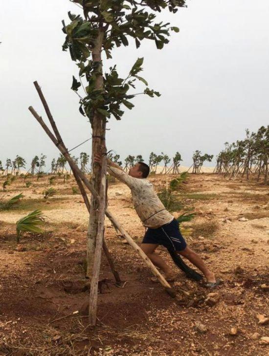 """台风过后,一张三沙市赵述岛""""扶树哥""""的照片火了"""