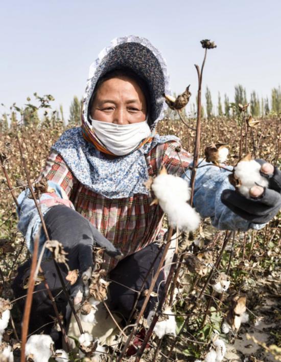 新疆塔里木盆地棉花采摘进入尾声
