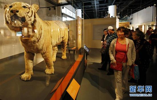 """10月25日,上海自然博物馆重磅引进的英国伦敦自然历史博物馆""""灭绝:并非世界末日?""""巡展项目对公众开放。作为上海科技馆国际合作交流成果之一,该展首次走进亚洲。 汤彦俊 摄"""