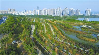 三亚红树林生态公园绿意盎然