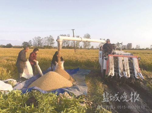 盐城抢抓秋收秋种 备足2.2万多台收割机