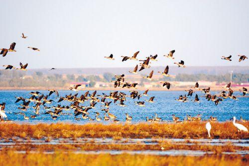 6万多只野生候鸟康平卧龙湖歇脚