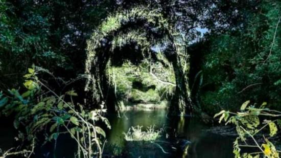 震撼 亚马逊热带雨林上惊现人脸