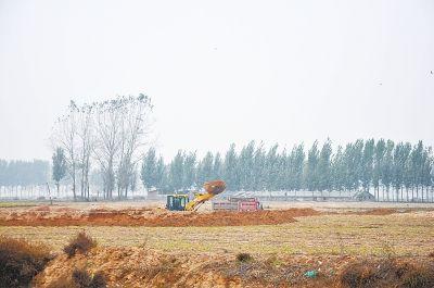 开封一村庄耕地被盗挖卖沙牟利 有人放哨有人挖