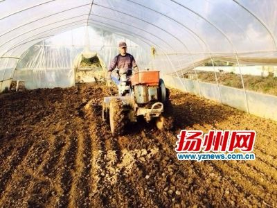 """扬州打造""""菜篮子工程""""槐泗5000亩蔬菜基地签约"""